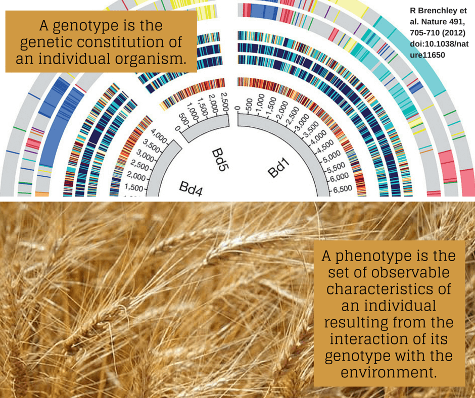 Genotype vs. Phenotype