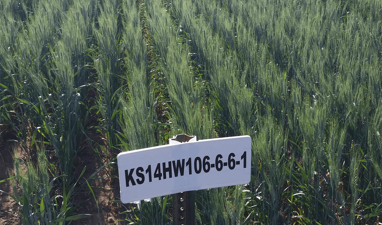 KS Silverado Field