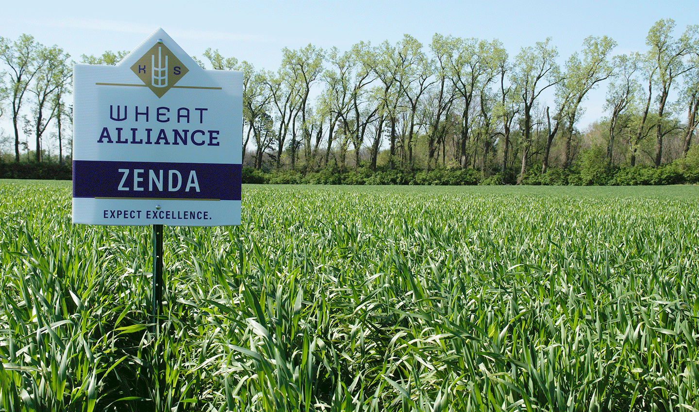 Photo: Field of Zenda Wheat.