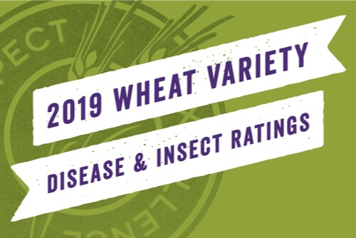 Wheat Insect and Disease Ratings