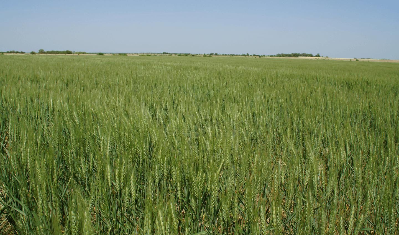 Field Image