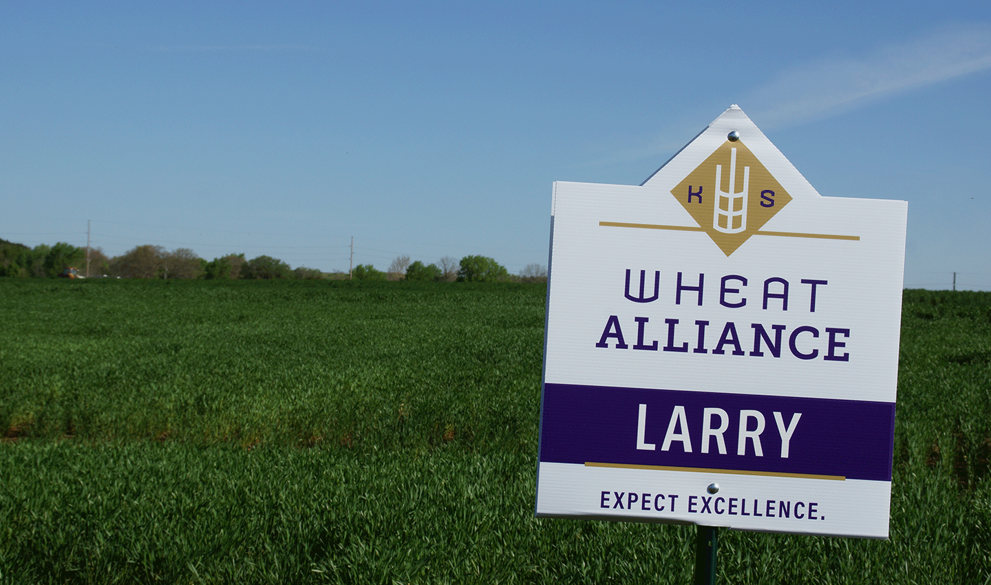 Photo: Field of Larry Wheat.
